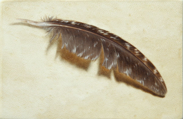 Turkey Feather | oil on goatskin | 6x4 | Ajay Brainard