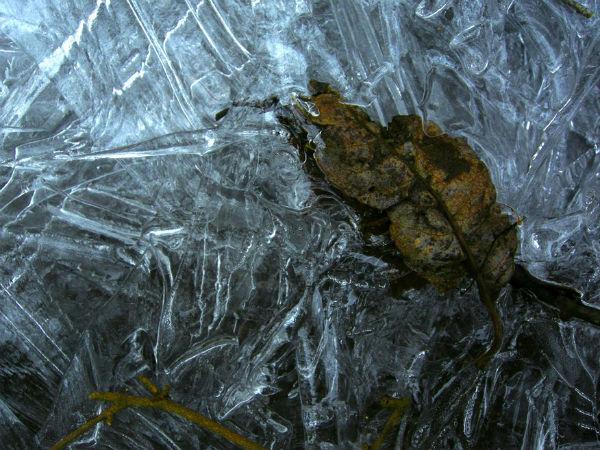 Daniel Heikalo D600 Feuille prise dans la glace bleuie par le ciel