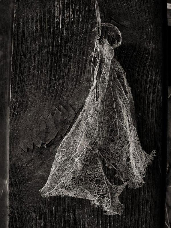 Plante séchée | Daniel Heikalo