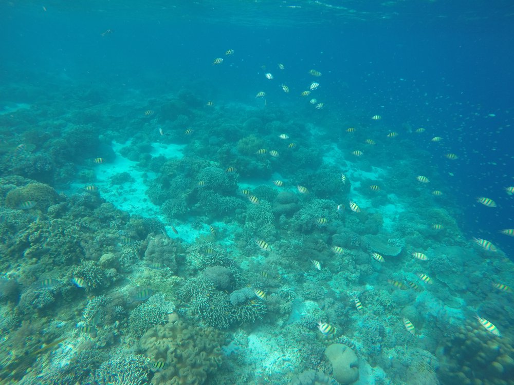 An Island Hopping Tour from Bohol: 5 Tips & True Thoughts 1