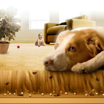 get rid of fleas in the house