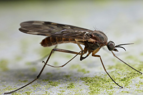 get rid of gnats in home