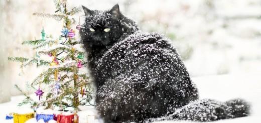 cat dandruff pictures