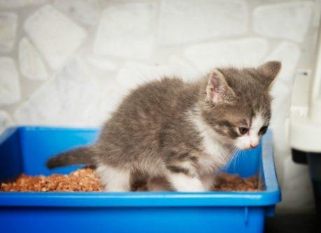 diarrhea in cats