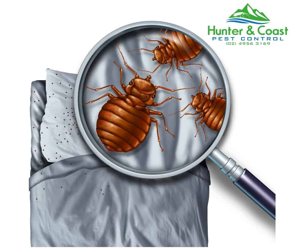 cockroach control and cockroach treatment