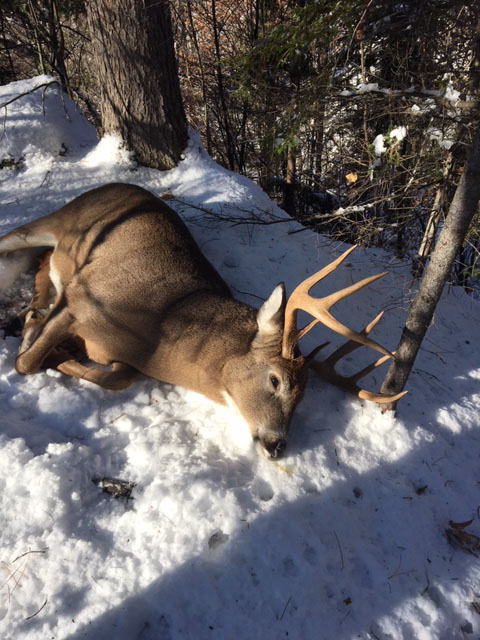 2018: Ethan Merrill shot this 228-pound, 8-pointer on Nov. 12 in Jay, Essex County.