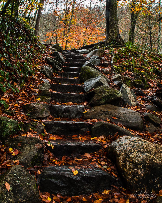 Smokies Trail