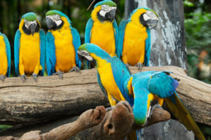 Parrots in a Row