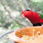 Bird Nutrition