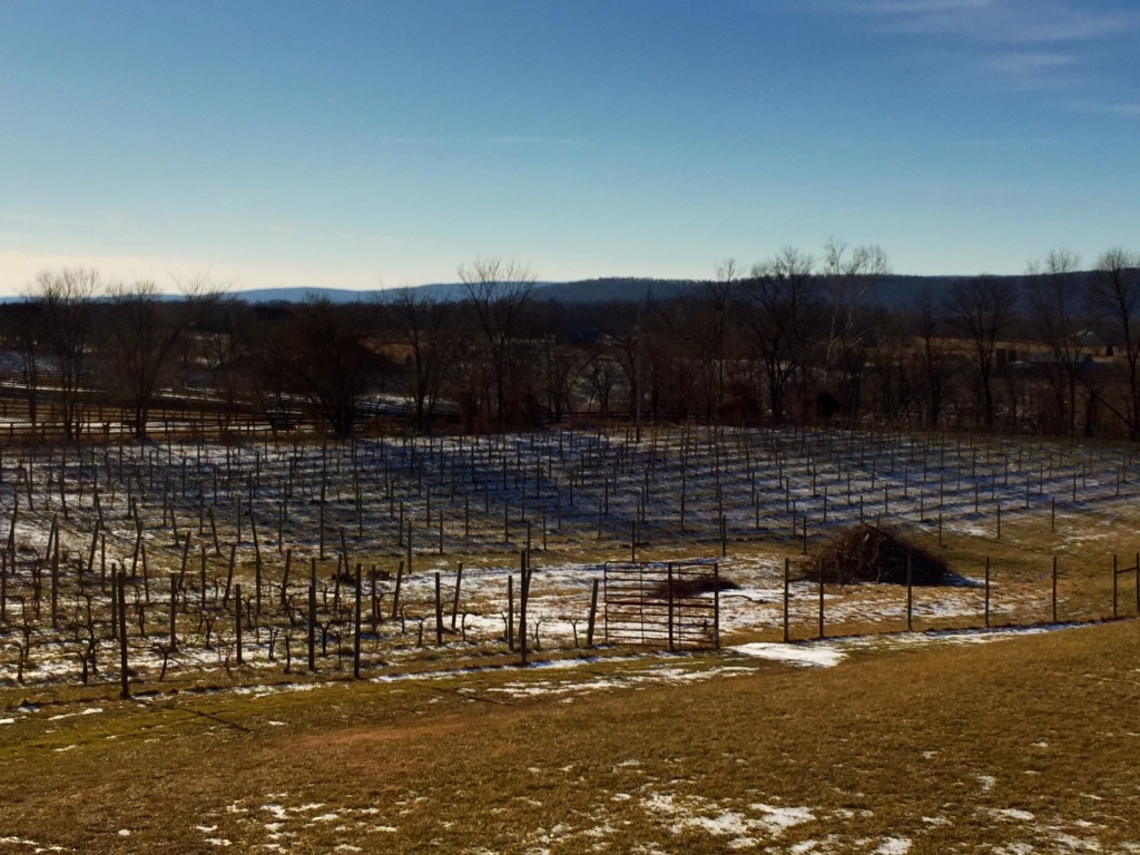 Sunset Hills Vineyard in Western Loudoun