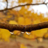 Raindrops on Branch 2