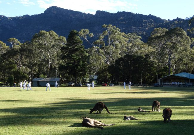 Disinterested deep outfielders - Halls Gap