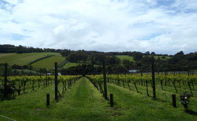 Montalto Winery and Olive Grove, Mornington Peninsula, Victoria