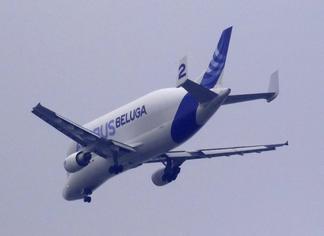 "The aptly named ""Beluga"""