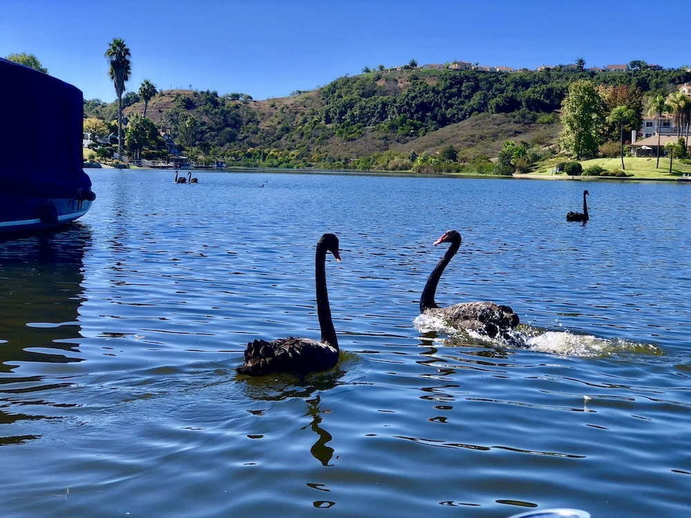 San Diego Gondola Cruises From Black Swan Gondola