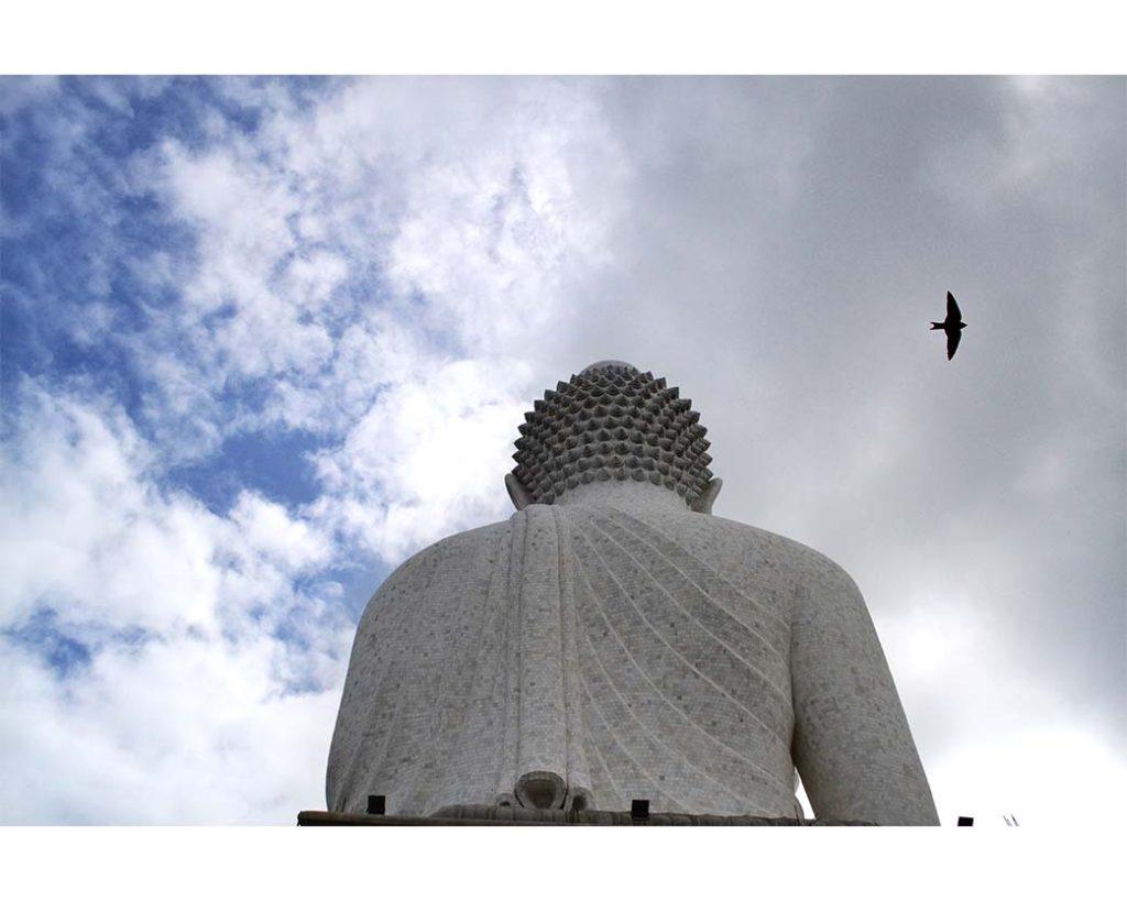 Lone Falcon, by Tania Sen