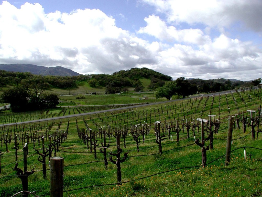 A Sonoma Vineyard: Taken by the author during a trip to California with his father, an RIT alum.