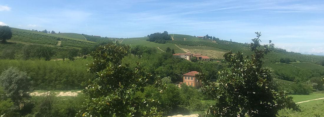 Wine: Barbera D'Alba ENRICO SERAFINO – Piemonte