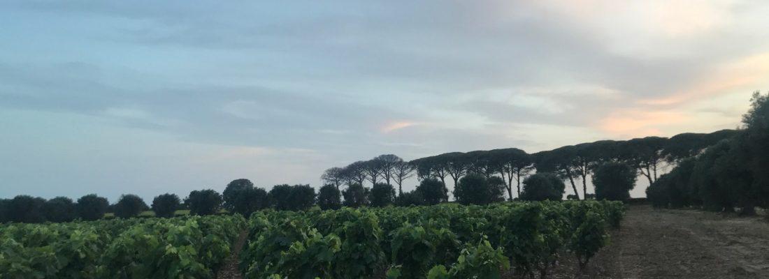 Wine Special: Salento Primitivo  MASSERIA LI VELI – Puglia