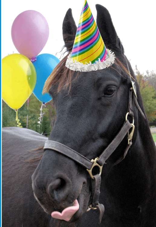 Party Horses