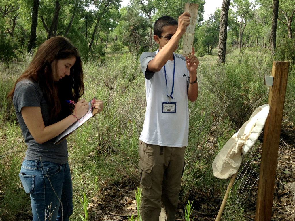 High schoolers Maddie and Carlos worked with BEMP UNM staff Kim Fike to continue summer data collections of leaf litter, pitfall traps, precipitation gauges, groundwater wells, water chemistry. They also help with site maintenance and more!