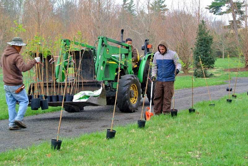 """JLPN - Martha Stewart """"Planting an Allee at the Farm"""""""