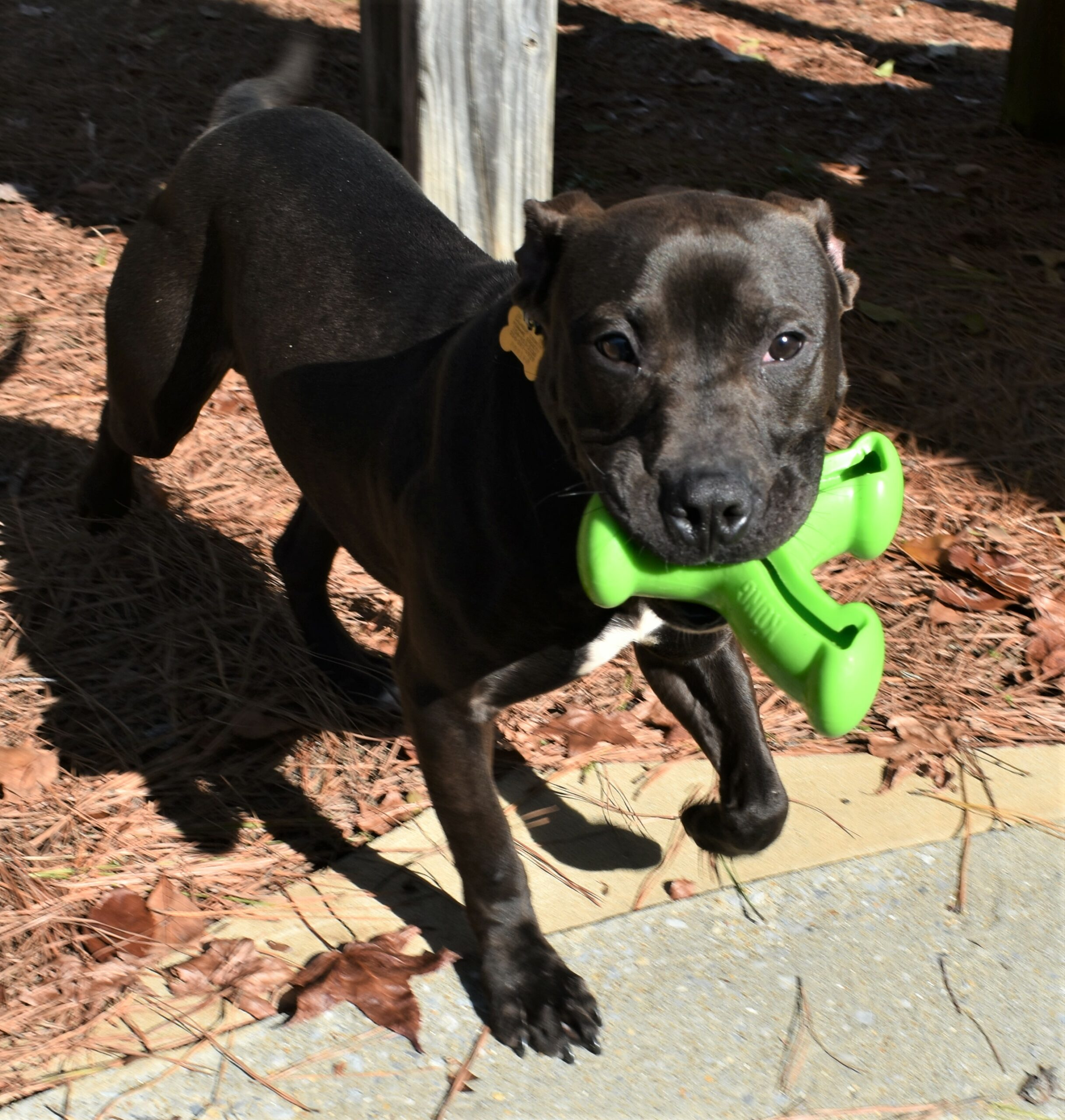 Butler with green toy