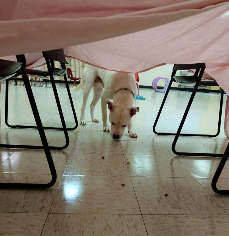 Franklin under tent for treat (2)