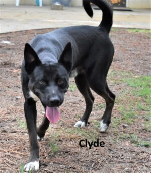 Full body of Clyde smiling with his ears up