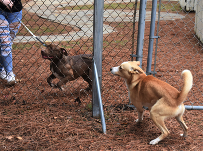 Buddy and Leo meet through the fence