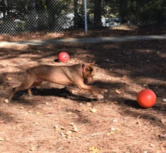 Robin plays with ball4