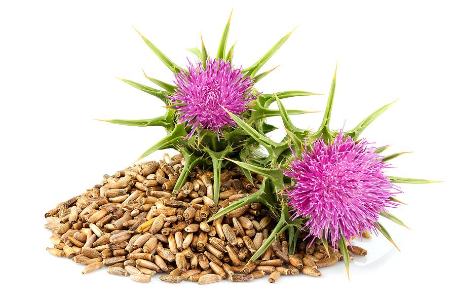 milk thistle extract for skin