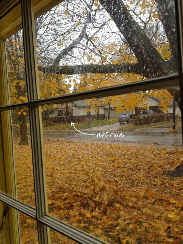 falling leaves | shorts and longs | julie rybarczyk