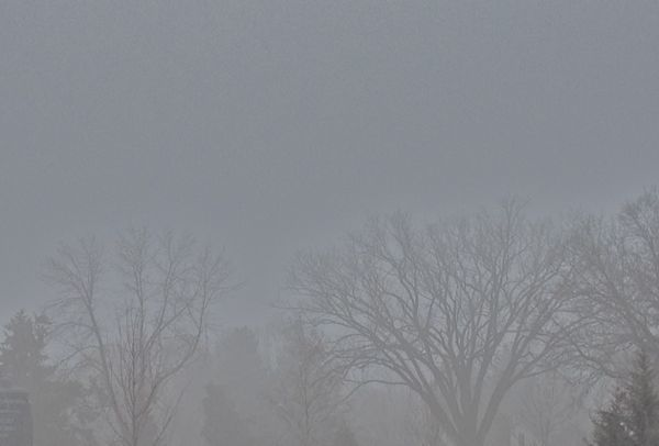 fog5 | shorts and longs | julie rybarczyk