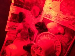 Chickens Week 1 All Asleep