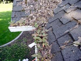 debris-filled-gutters