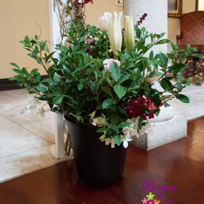 Picked Flower Plant