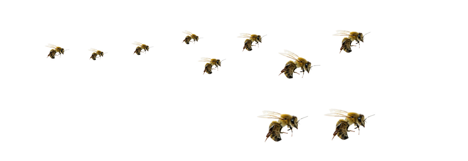 Robber Bees