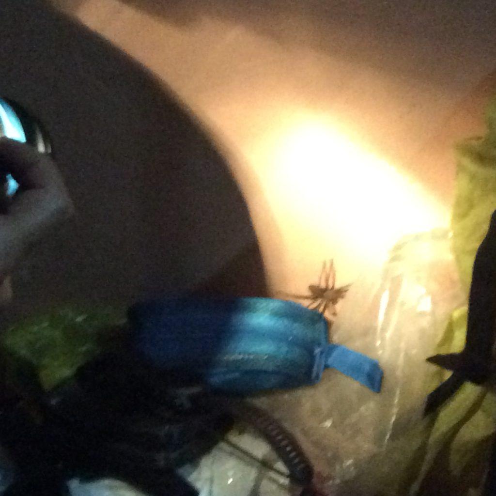 Spidey was huge!