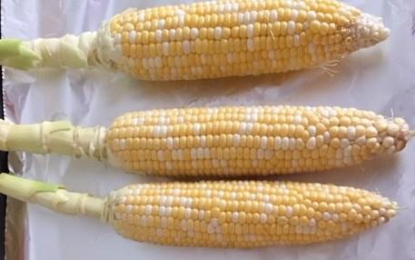 corn on foil