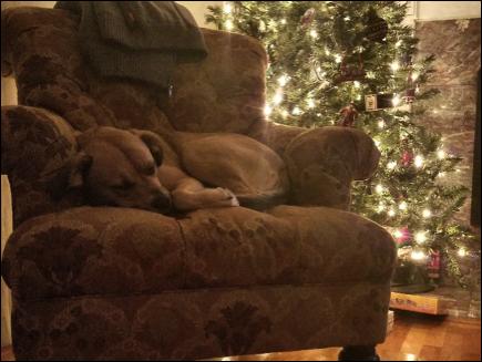 dog napping