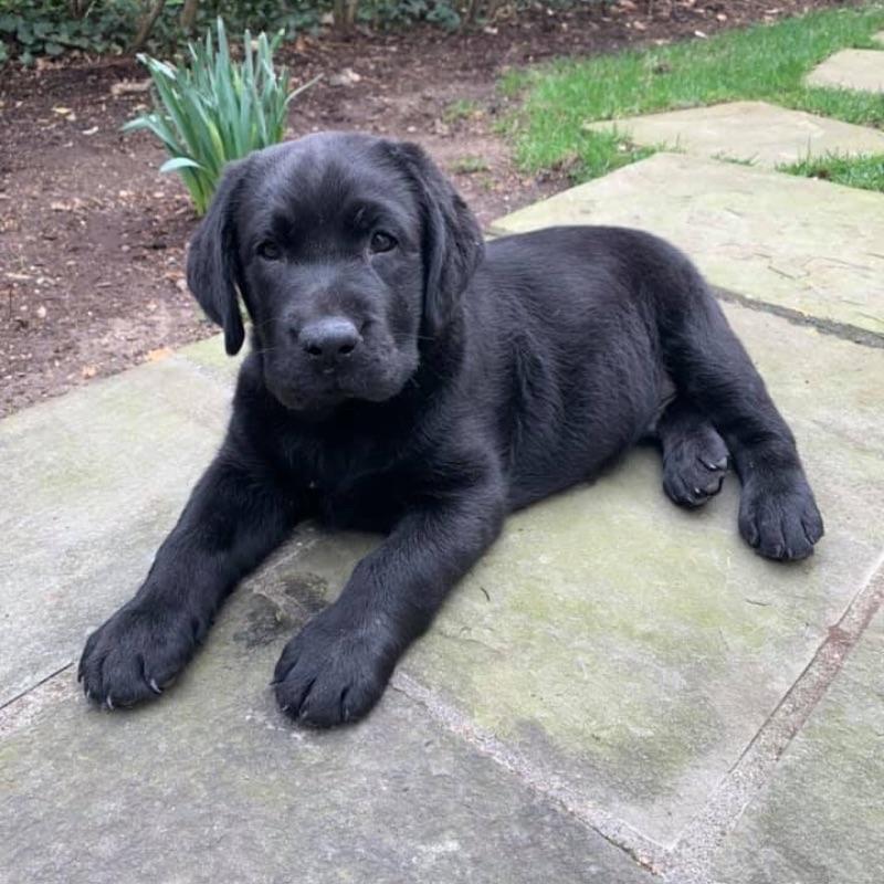 COVID puppy