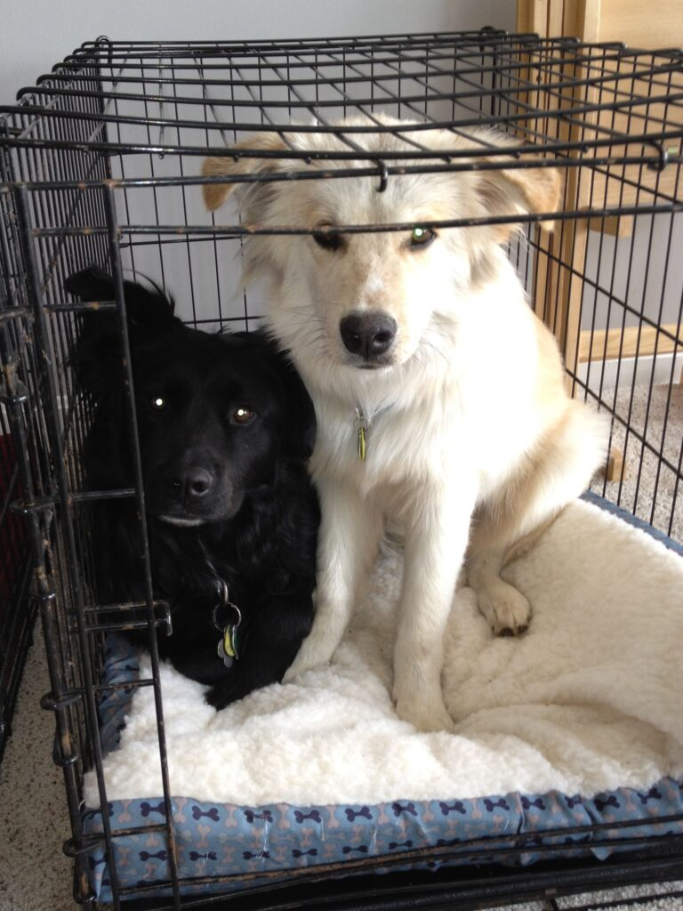 separation anxiety dogs