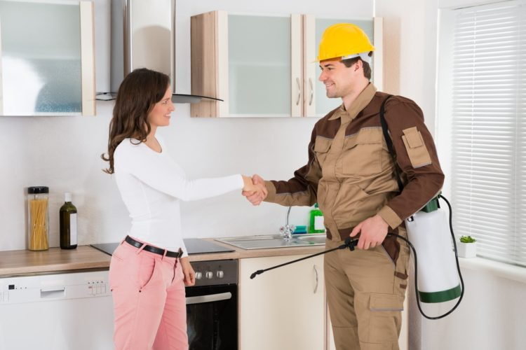 Why You Should Employ Pest Services