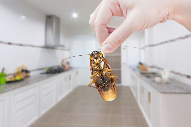 When You Head Indoors, Pests Do Too