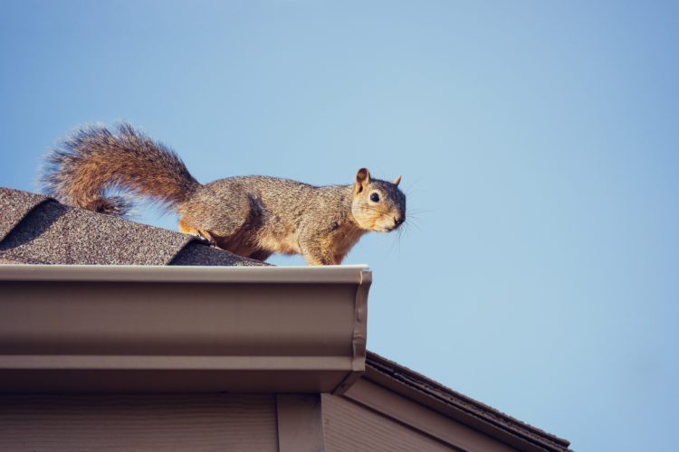 Squirrels Are Pests that Won't Eat Your Food