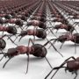 Track Ants to Stop Them at the Source