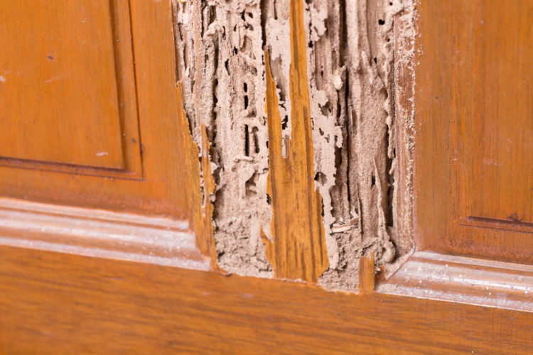 How to Rebuild After Termite Damage