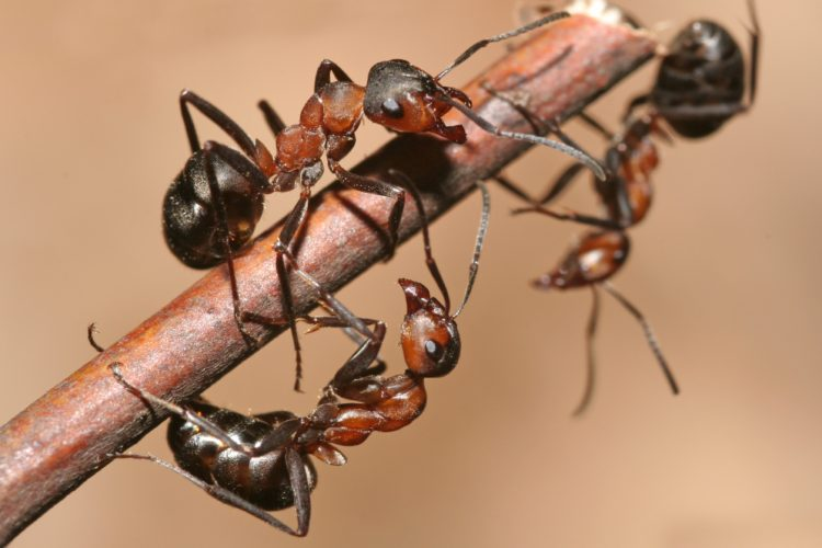 Summer's Here, and so Are the Ants