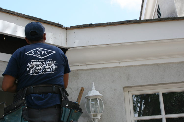 Exploring the Building Blocks to Home Pest Control